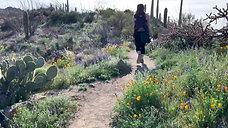 Saguaro National Park 2019