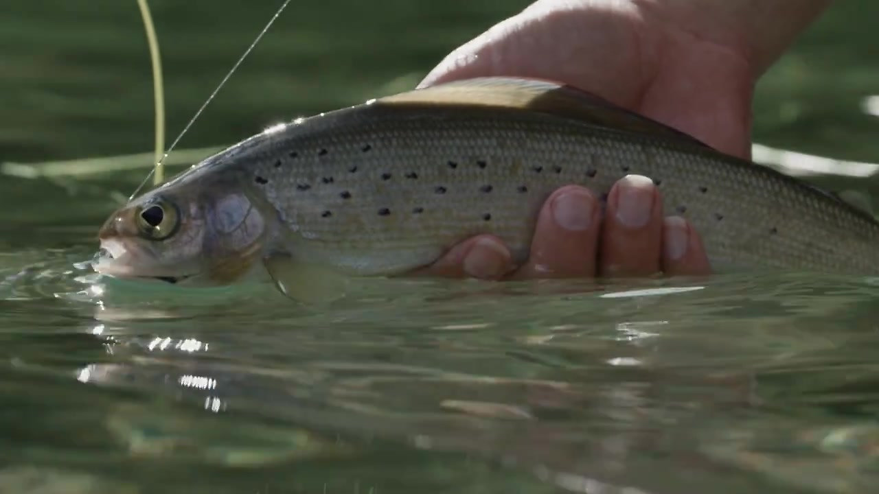 Grayling with Fishing BC