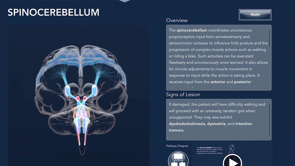 Interactive Cerebellum Demo