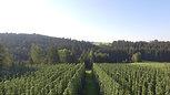 Luftaufnahmen Hopfenfelder Niederösterreich