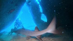 C. Shark 7