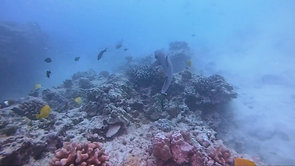 D. A white tip reef shark and reefs 3
