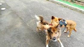 愛美、レイク、リバー走る!