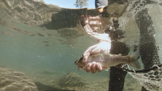 Truckee Fly Fish