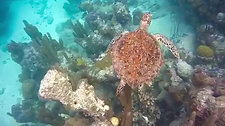 Turtle, Turks & Caicos