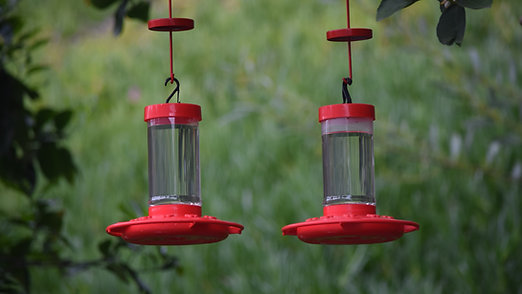 Humminbird feeder - Block the ants!