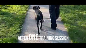 Dog Training Ad