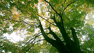 012487936-beautiful-tall-tree-forest_H264_420