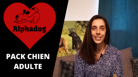 PACK FORMATION CHIEN ADULTE