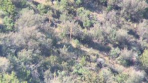 Arizona Coues Deer Bucks
