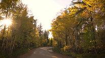 A Drive Through Autumn