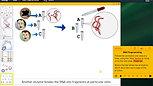 Biology-ENG