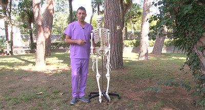 4 anatomia extremidad superior