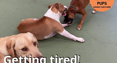 Getting tired!