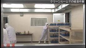 Production Process Hokkaido Reishi