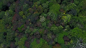 Belipola deciduous forest topography