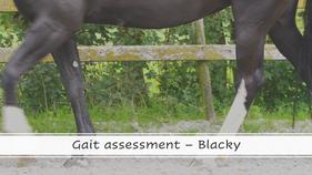 Assessment Blacky Taiwan