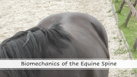 Biomechanics of The Equine Spine