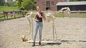 Part 1. The Skeleton