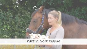 Part 2 - Soft tissue