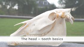 Teeth - basics