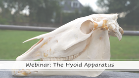 The Equine Hyoid