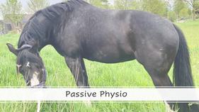 Webinar. Passive Physio