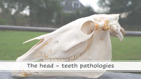 Teeth - pathologies