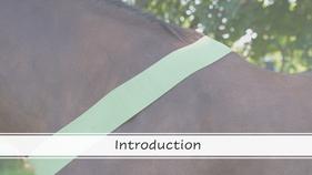 Bodywrap Introduction