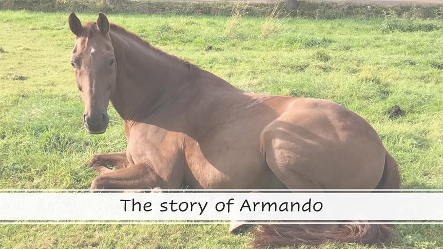 The Story of Armando