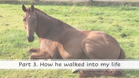 Episode 3. How Armando walked into my life