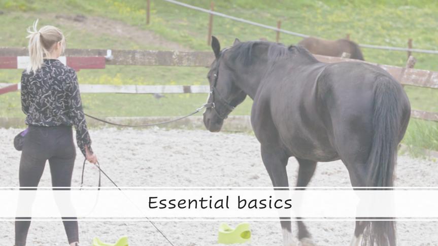 Essential basics