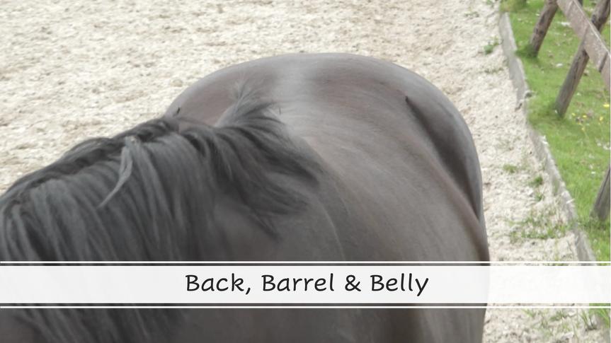 Back, Barrel & Belly