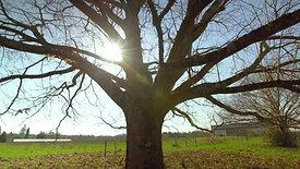 Le temps des arbre - France 5 - 70'