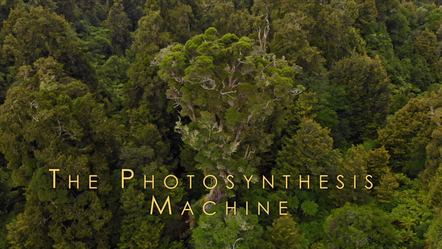 The Photosynthesis Machine