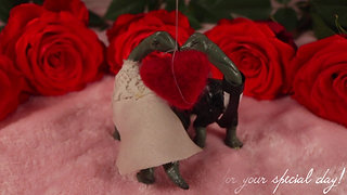 COLLECTIVE MIND WEDDINGS | STOP-MOTION