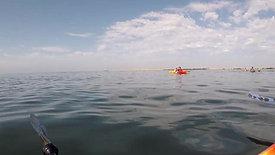 whale Marc Mehnert