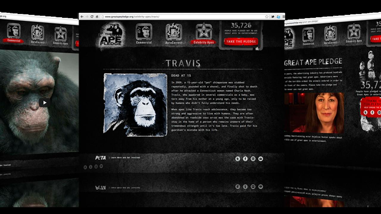 The Great Ape Pledge - Case Study