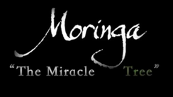 """The Miracle Tree"" Moringa Documentary (English subtitles)"