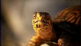 Newport Aquarium_Turtles