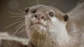Newport Aquarium_Otters