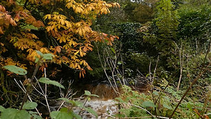 An Autumnal Stroll To Summer Lodge