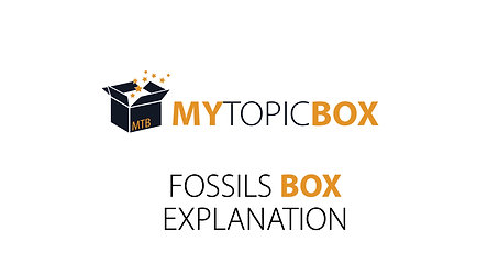Fossils box explanation sample