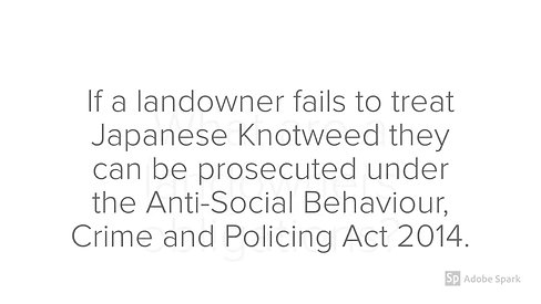 Japanese Knotweed FAQs