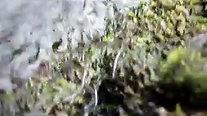 Elver Migration2