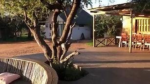 A Beautiful Morning at Nyumbani