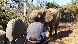 Elephants on Nyumbani