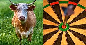 Bull or Bullseye