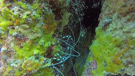 Discover Seychelles Sea