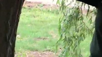 woodland dragons